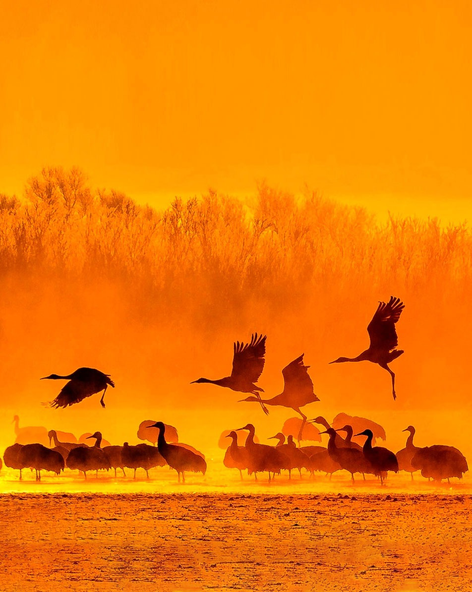 Festival of the Cranes, Bosque del Apache