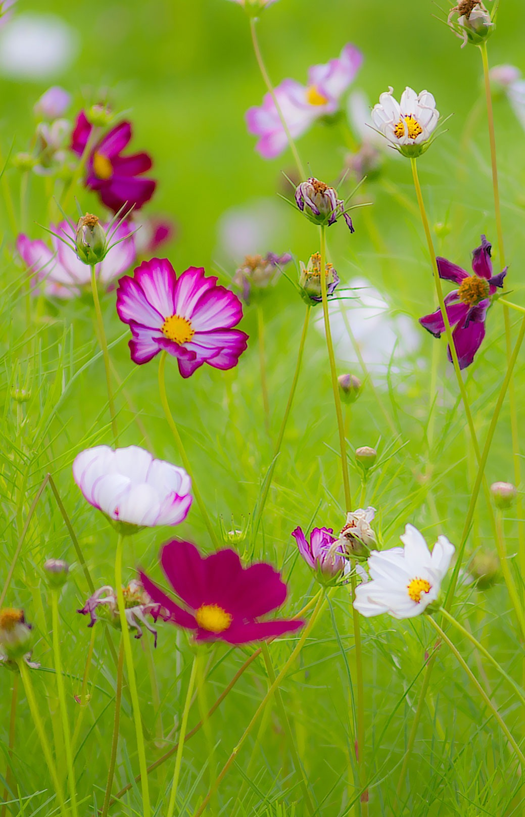 Free Photo of the Day - Summer Wildflowers